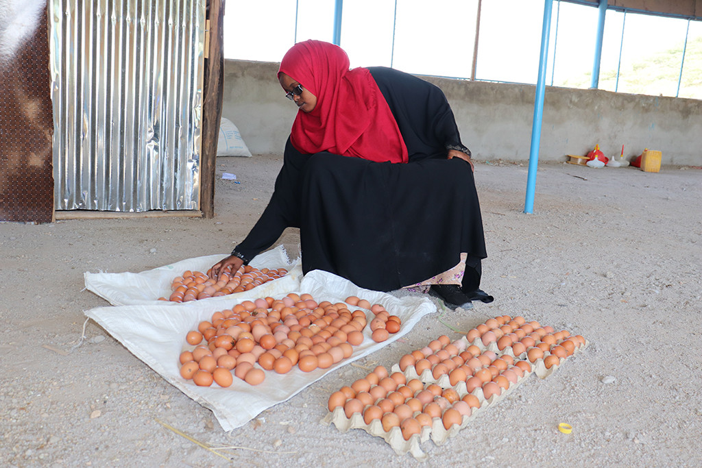 Idil Hussein, Daryeel Poultry farm operations Manager